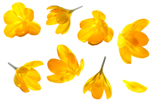 Here's A Quick Pick-Me-Up: A Bunch Of Yellow Flowers